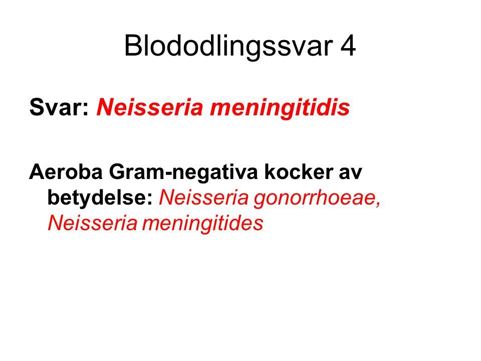 Blododlingssvar 4 Svar: Neisseria meningitidis Aeroba Gram-negativa kocker av betydelse: Neisseria gonorrhoeae, Neisseria meningitides