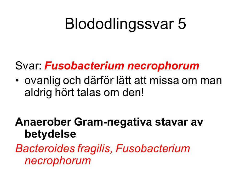 Blododlingssvar 5 Svar: Fusobacterium necrophorum ovanlig och därför lätt att missa om man aldrig hört talas om den! Anaerober Gram-negativa stavar av