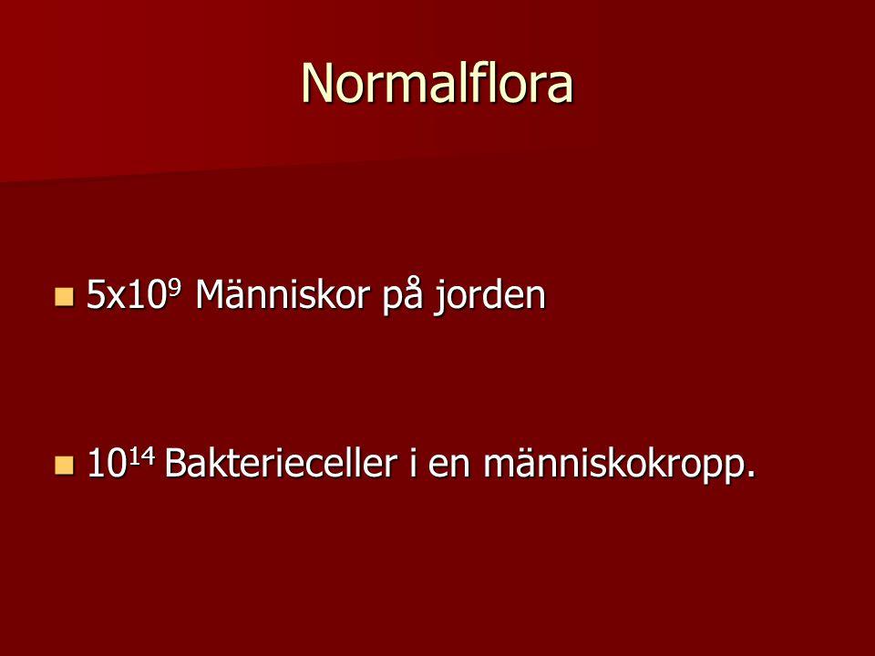 Normalflora 5x10 9 Människor på jorden 5x10 9 Människor på jorden 10 14 Bakterieceller i en människokropp. 10 14 Bakterieceller i en människokropp.