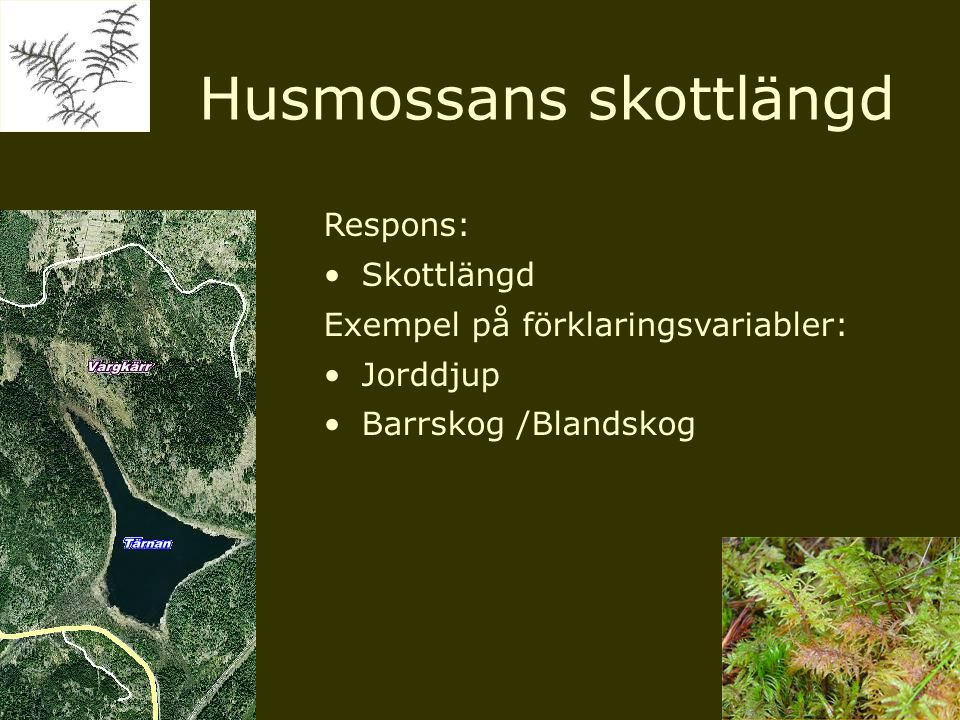 Respons: Skottlängd Exempel på förklaringsvariabler: Jorddjup Barrskog /Blandskog Husmossans skottlängd