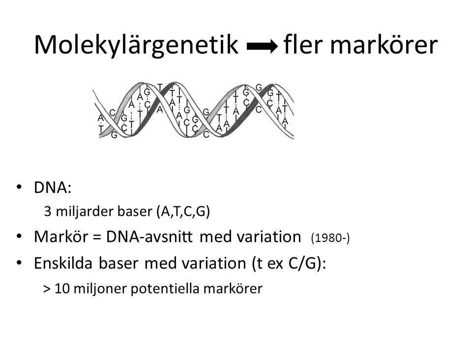 Molekylärgenetik fler markörer DNA: 3 miljarder baser (A,T,C,G) Markör = DNA-avsnitt med variation (1980-) Enskilda baser med variation (t ex C/G): >