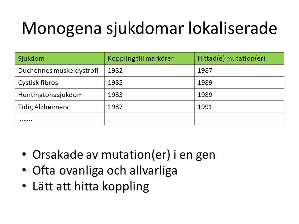 Monogena sjukdomar lokaliserade SjukdomKoppling till markörerHittad(e) mutation(er) Duchennes muskeldystrofi19821987 Cystisk fibros19851989 Huntington