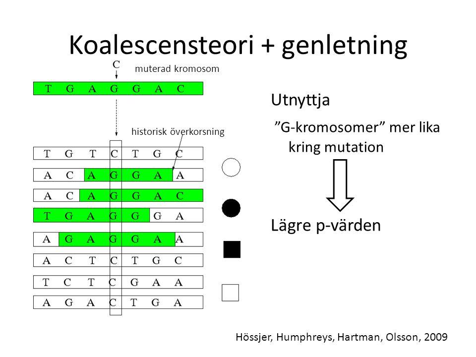 """Koalescensteori + genletning Utnyttja """"G-kromosomer"""" mer lika kring mutation Lägre p-värden historisk överkorsning muterad kromosom Hössjer, Humphreys"""