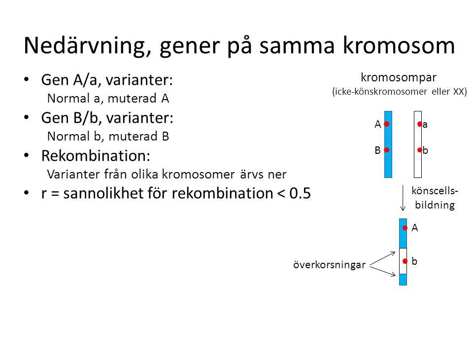 Nedärvning, gener på samma kromosom Gen A/a, varianter: Normal a, muterad A Gen B/b, varianter: Normal b, muterad B Rekombination: Varianter från olik