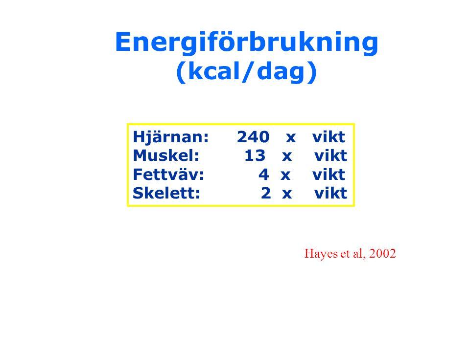 Energiförbrukning (kcal/dag) Hjärnan: 240 x vikt Muskel: 13 x vikt Fettväv: 4 x vikt Skelett: 2 x vikt Hayes et al, 2002