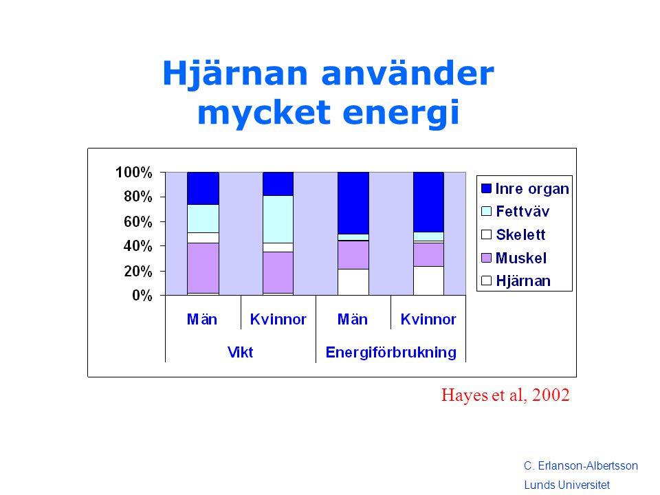 Hjärnan använder mycket energi Hayes et al, 2002 C. Erlanson-Albertsson Lunds Universitet