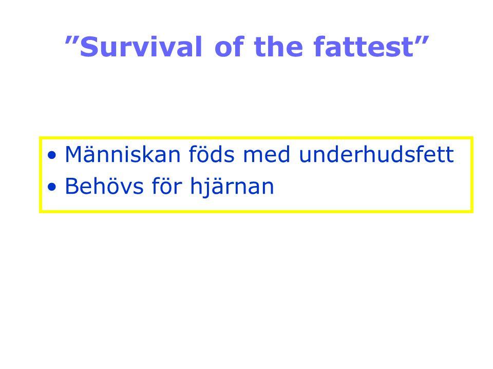 """""""Survival of the fattest"""" Människan föds med underhudsfett Behövs för hjärnan"""