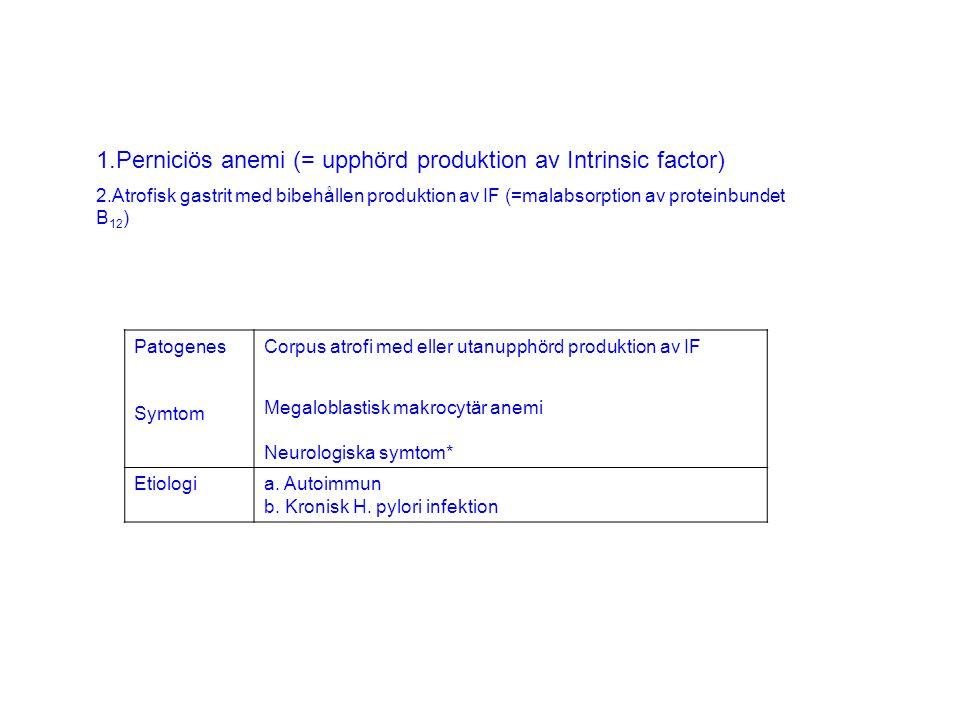 1.Perniciös anemi (= upphörd produktion av Intrinsic factor) 2.Atrofisk gastrit med bibehållen produktion av IF (=malabsorption av proteinbundet B 12 ) Patogenes Symtom Corpus atrofi med eller utanupphörd produktion av IF Megaloblastisk makrocytär anemi Neurologiska symtom* Etiologia.
