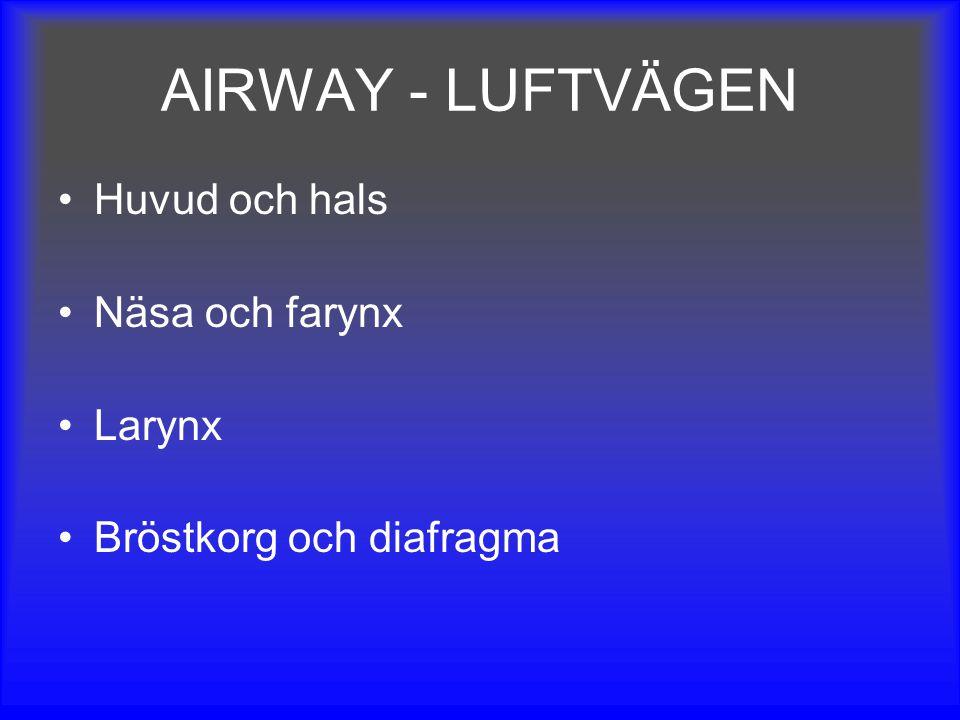 AIRWAY - LUFTVÄGEN Huvud och hals Näsa och farynx Larynx Bröstkorg och diafragma