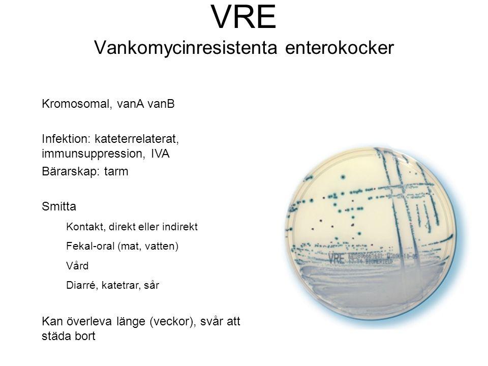VRE Vankomycinresistenta enterokocker Kromosomal, vanA vanB Infektion: kateterrelaterat, immunsuppression, IVA Bärarskap: tarm Smitta Kontakt, direkt