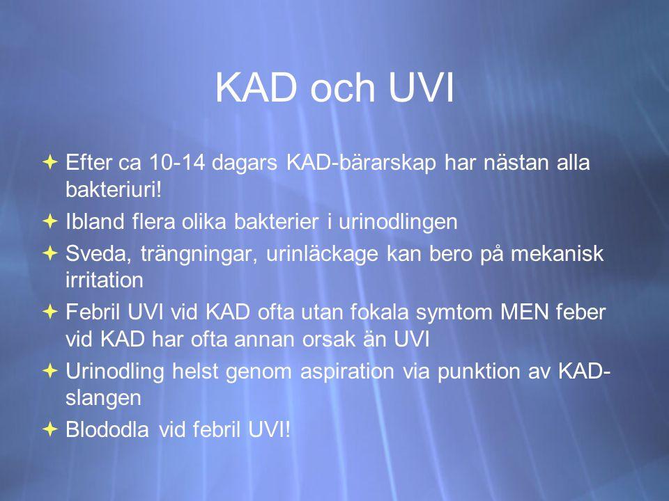 KAD och UVI  Efter ca 10-14 dagars KAD-bärarskap har nästan alla bakteriuri.