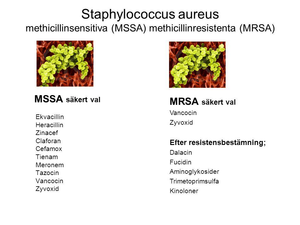 Staphylococcus aureus methicillinsensitiva (MSSA) methicillinresistenta (MRSA) MSSA säkert val Ekvacillin Heracillin Zinacef Claforan Cefamox Tienam M
