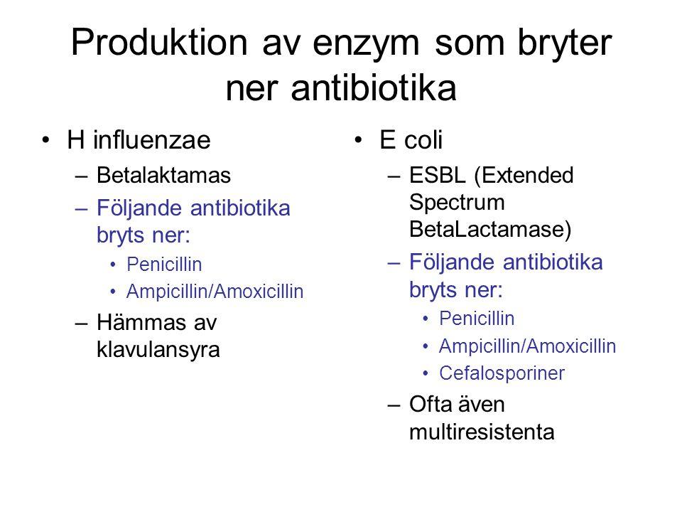 Produktion av enzym som bryter ner antibiotika H influenzae –Betalaktamas –Följande antibiotika bryts ner: Penicillin Ampicillin/Amoxicillin –Hämmas a