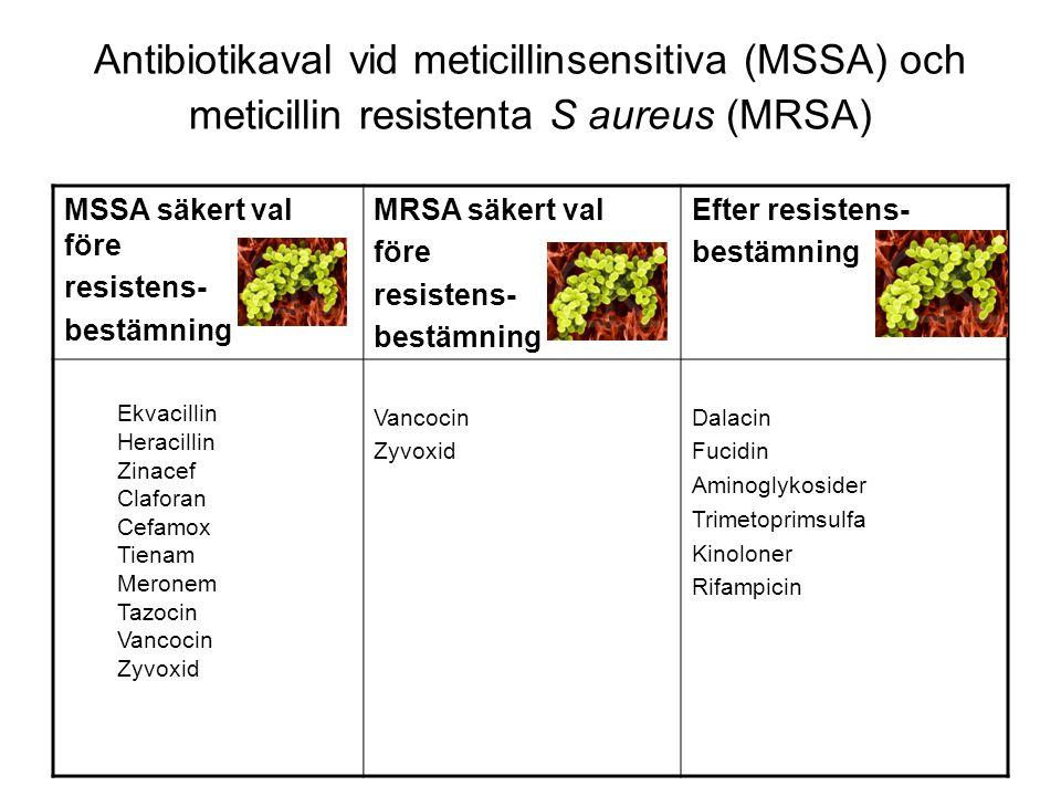 Antibiotikaval vid meticillinsensitiva (MSSA) och meticillin resistenta S aureus (MRSA) MSSA säkert val före resistens- bestämning MRSA säkert val för