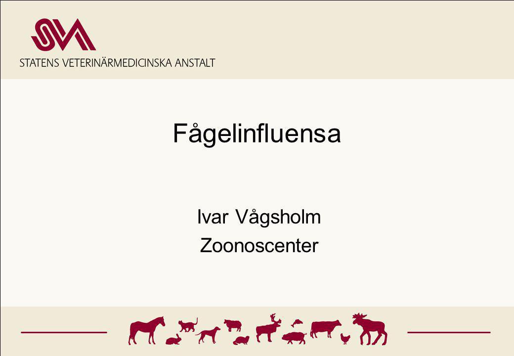 Outline Influensa virus Influensa hos djur Fågelinfluensa - hönspest LPAI vs HPAI Diagnos Historik och spridning västerut Risk bedömning