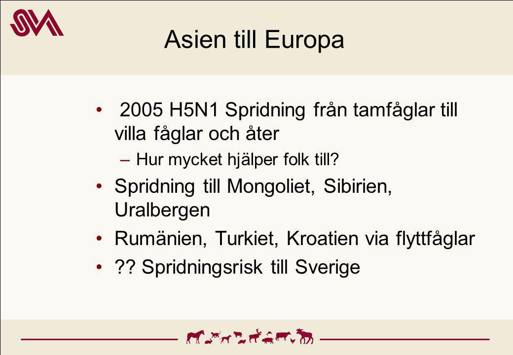 Asien till Europa 2005 H5N1 Spridning från tamfåglar till villa fåglar och åter –Hur mycket hjälper folk till.