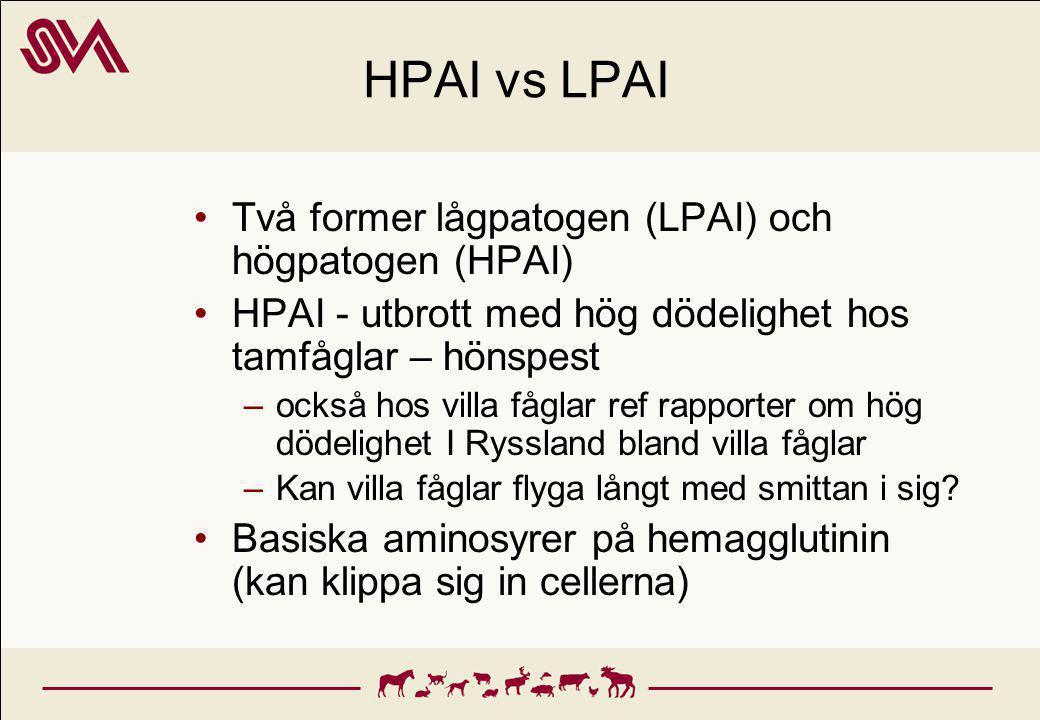 HPAI vs LPAI Två former lågpatogen (LPAI) och högpatogen (HPAI) HPAI - utbrott med hög dödelighet hos tamfåglar – hönspest –också hos villa fåglar ref rapporter om hög dödelighet I Ryssland bland villa fåglar –Kan villa fåglar flyga långt med smittan i sig.