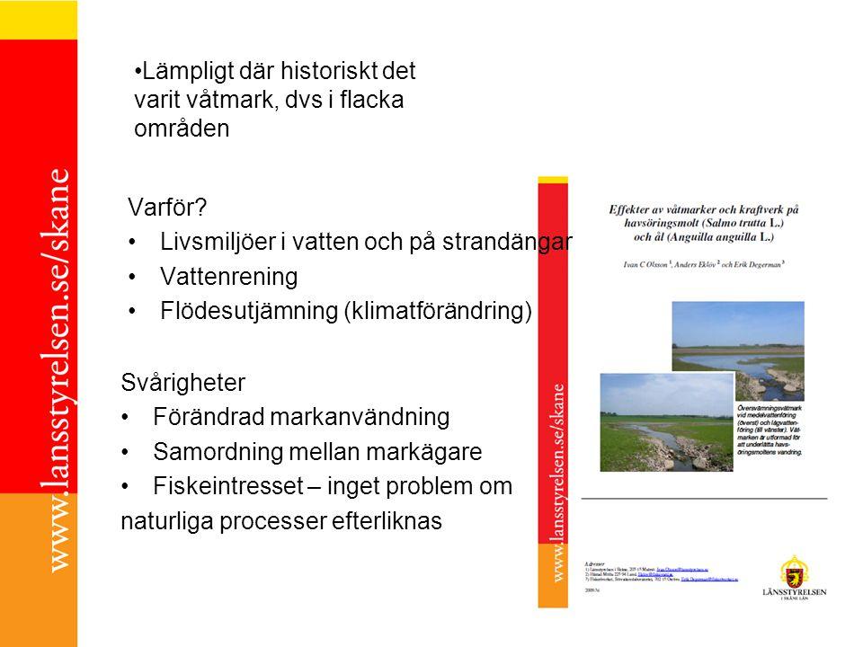 Varför? Livsmiljöer i vatten och på strandängar Vattenrening Flödesutjämning (klimatförändring) Svårigheter Förändrad markanvändning Samordning mellan