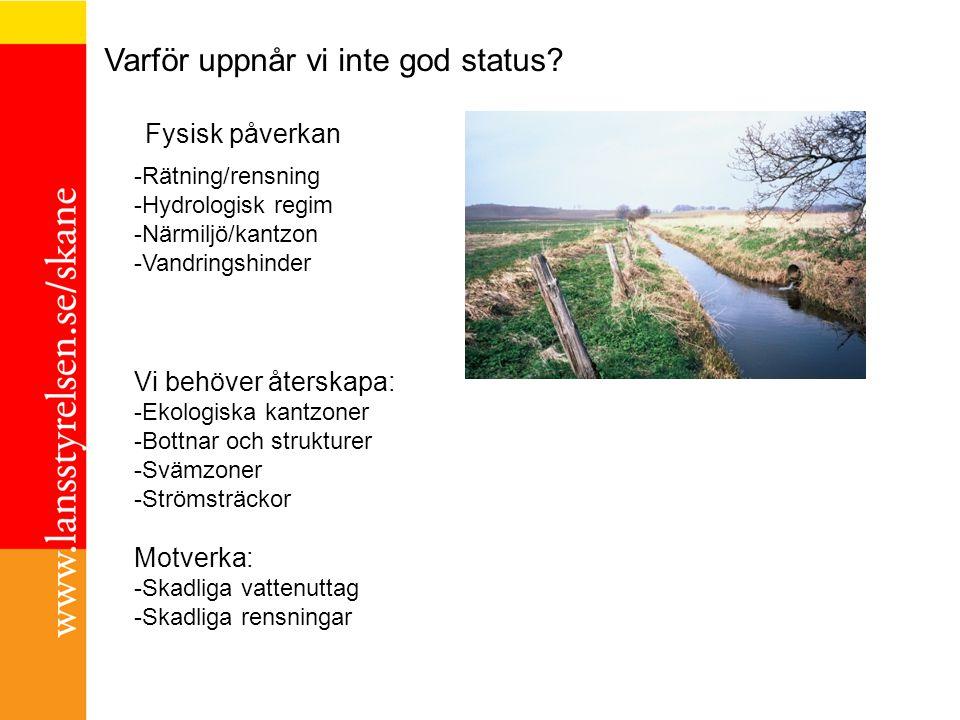 -Rätning/rensning -Hydrologisk regim -Närmiljö/kantzon -Vandringshinder Varför uppnår vi inte god status? Vi behöver återskapa: -Ekologiska kantzoner