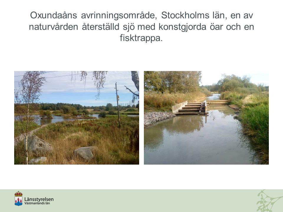 Oxundaåns avrinningsområde, Stockholms län, en av naturvården återställd sjö med konstgjorda öar och en fisktrappa.