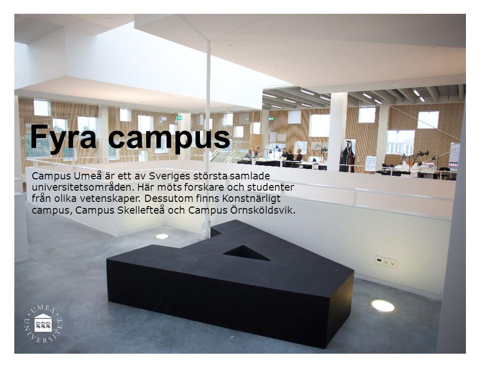 Fyra campus Campus Umeå är ett av Sveriges största samlade universitetsområden. Här möts forskare och studenter från olika vetenskaper. Dessutom finns