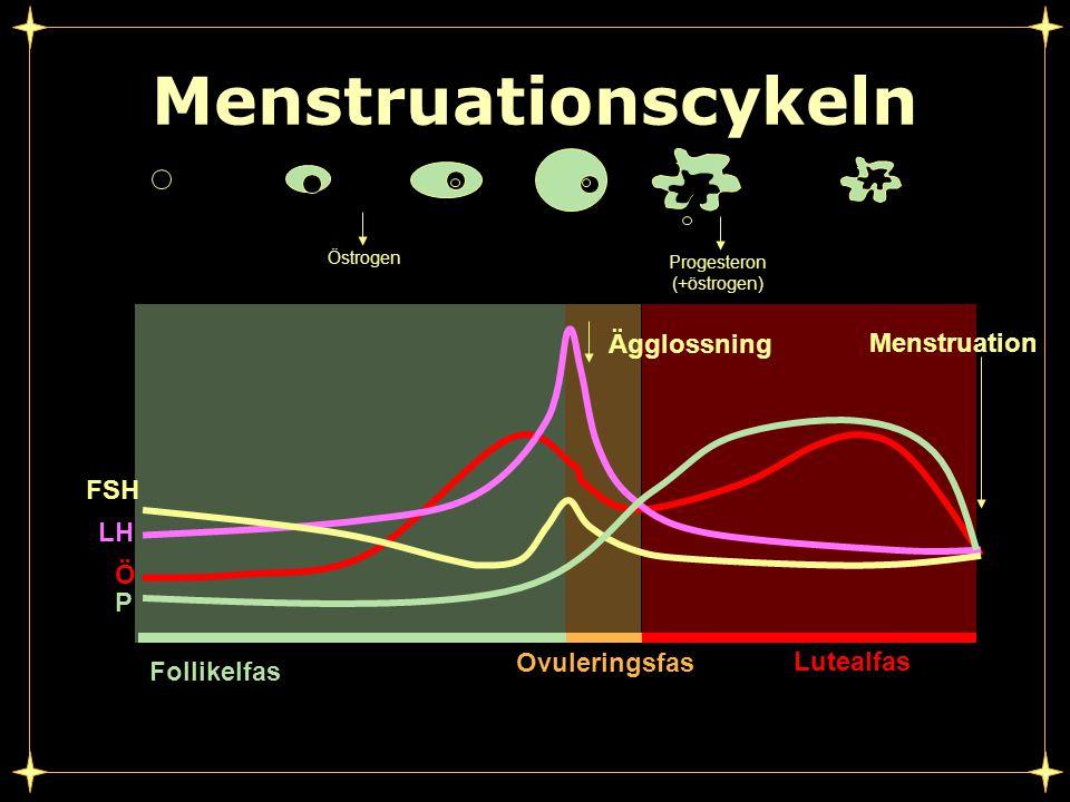 P Ö LH FSH Follikelfas Ovuleringsfas Lutealfas Menstruationscykeln Ägglossning Menstruation Östrogen Progesteron (+östrogen)