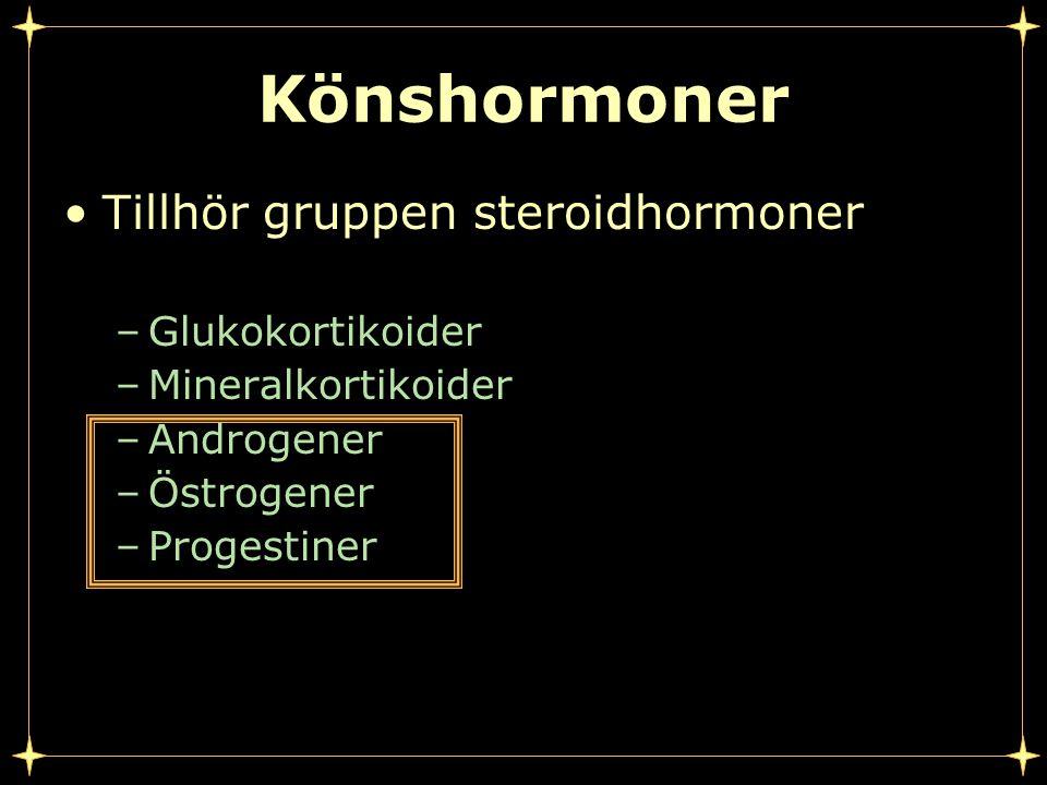 Könshormoner Tillhör gruppen steroidhormoner –Glukokortikoider –Mineralkortikoider –Androgener –Östrogener –Progestiner