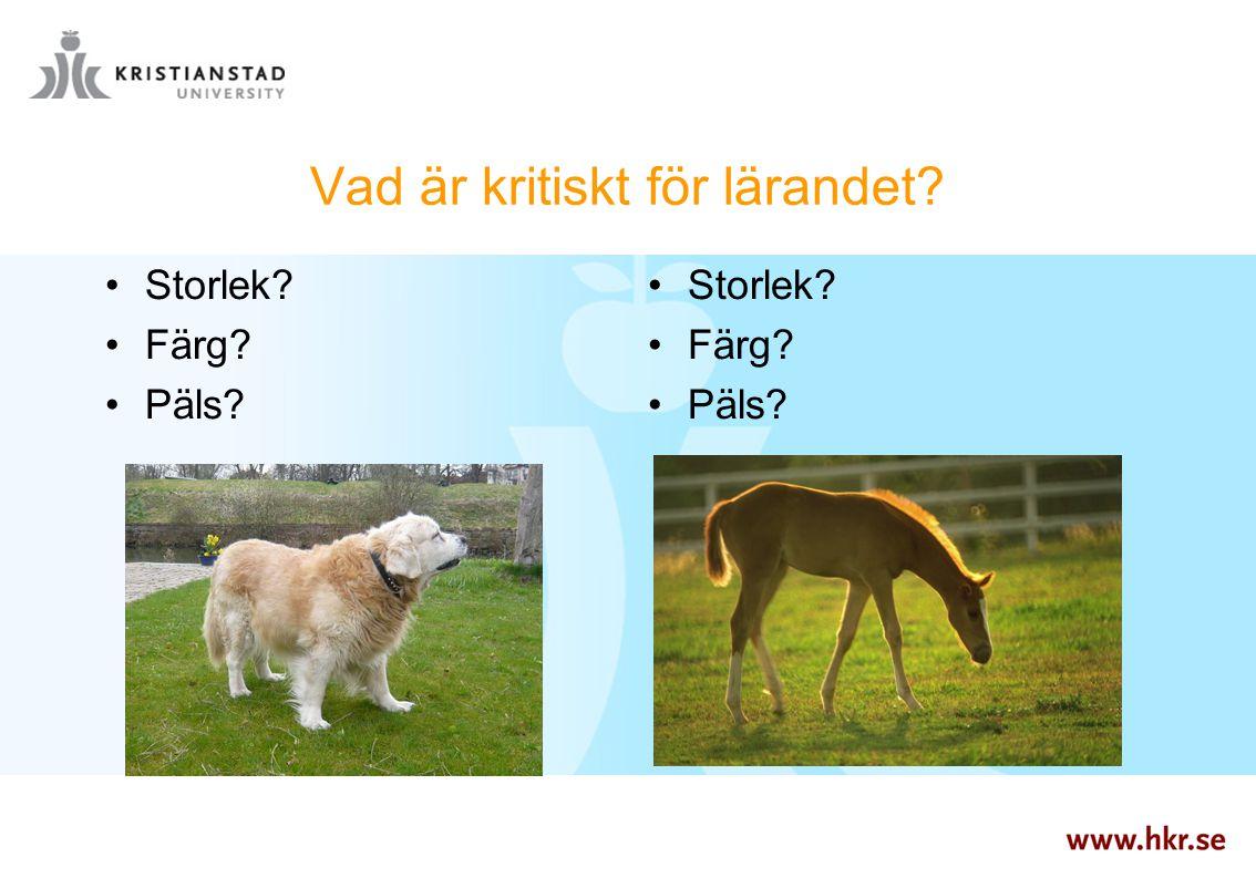 Vad är kritiskt för lärandet? Storlek? Färg? Päls? Storlek? Färg? Päls?