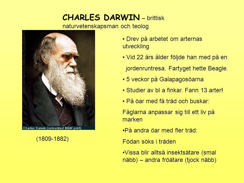 Darwins slutsats: Konkurrensen om födan gör att de som är bäst anpassade till sin omgivning har störst chanser till överlevnad.