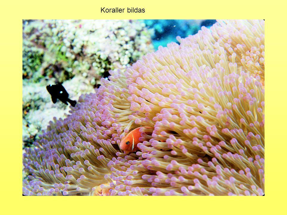 För 450 miljoner år sedan – Koraller, tagghudingar och bläckfiskar På forntiden alltså… Enkla ryggradsdjur (käklösa fiskar) 400 miljoner år sedan – Växter på land, de skandinaviska fjällen bildas Då syre produceras bildas även Ozon, O 3.