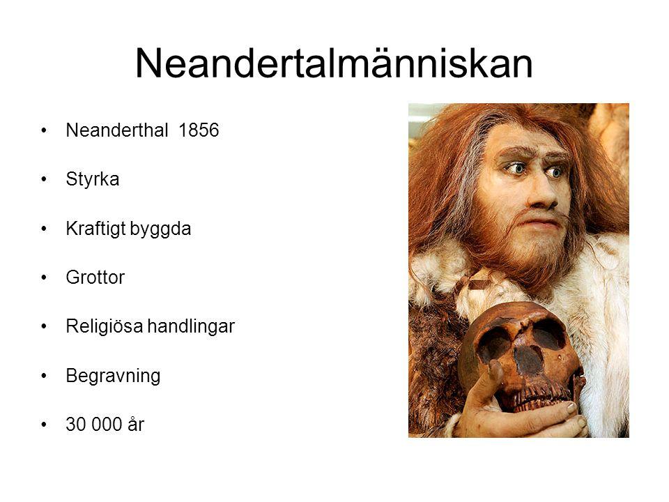 Neandertalmänniskan Neanderthal 1856 Styrka Kraftigt byggda Grottor Religiösa handlingar Begravning 30 000 år