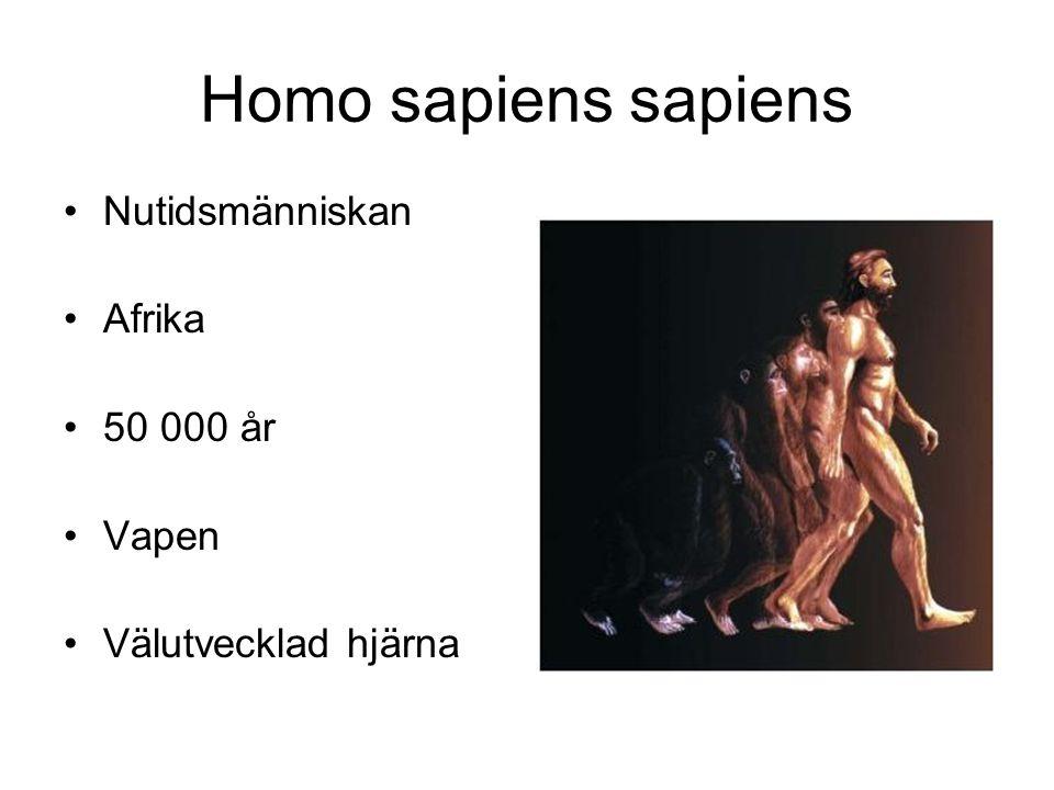 Homo sapiens sapiens Nutidsmänniskan Afrika 50 000 år Vapen Välutvecklad hjärna
