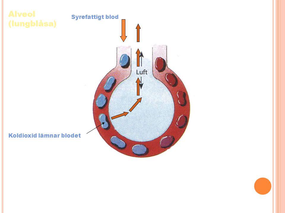 Syrefattigt blod Koldioxid lämnar blodet Alveol (lungblåsa)