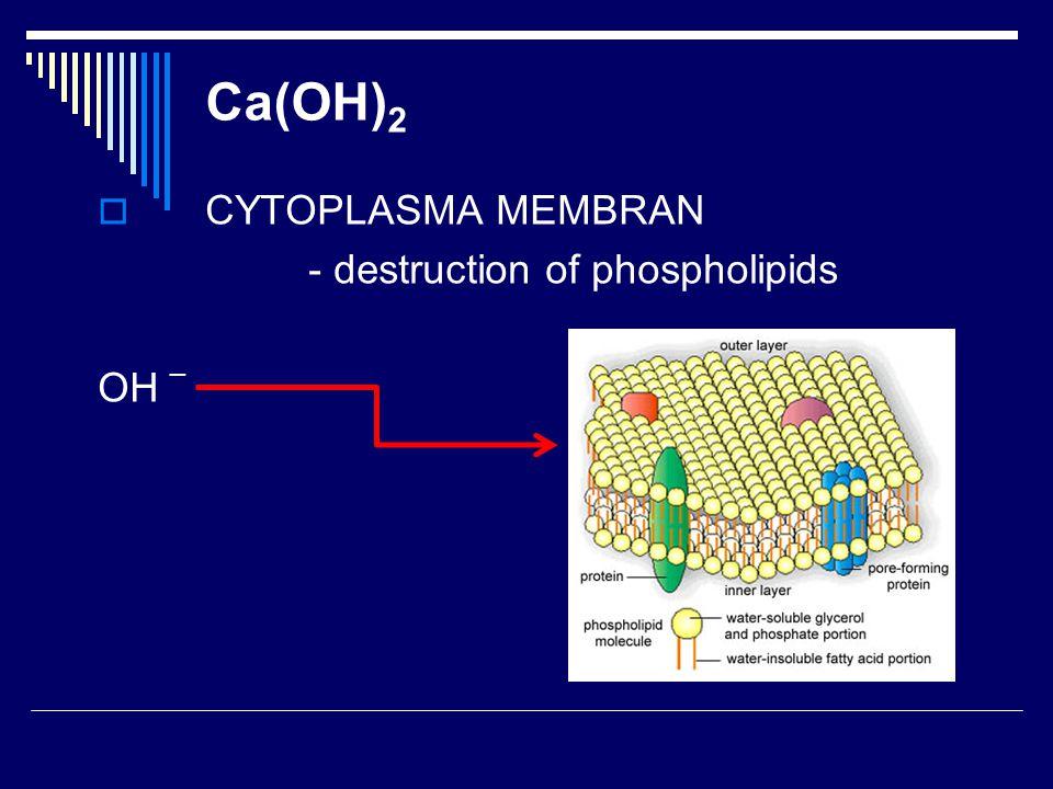  CYTOPLASMA MEMBRAN - destruction of phospholipids OH _ Ca(OH) 2