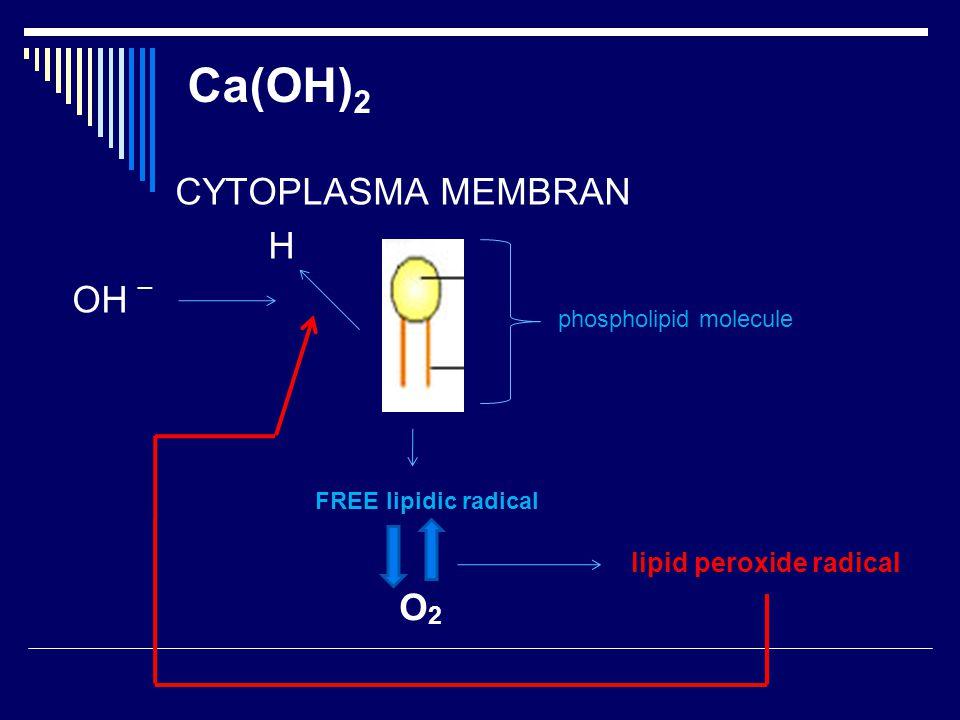 CYTOPLASMA MEMBRAN H OH _ Ca(OH) 2 phospholipid molecule FREE lipidic radical O2O2 lipid peroxide radical