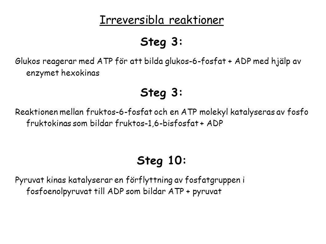 Irreversibla reaktioner Steg 3: Glukos reagerar med ATP för att bilda glukos-6-fosfat + ADP med hjälp av enzymet hexokinas Steg 3: Reaktionen mellan f