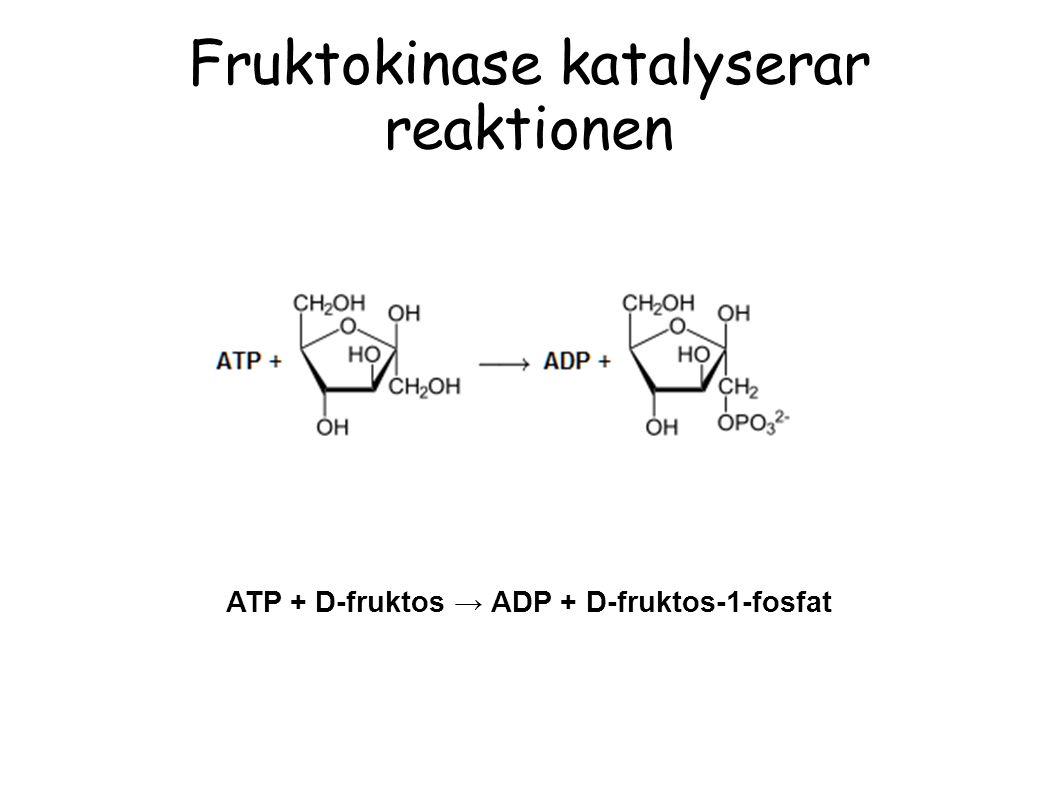 Fruktokinase katalyserar reaktionen ATP + D-fruktos → ADP + D-fruktos-1-fosfat