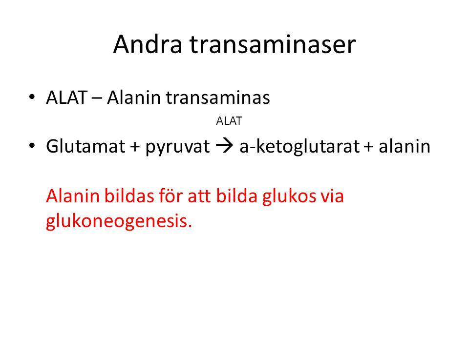 Andra transaminaser ALAT – Alanin transaminas ALAT Glutamat + pyruvat  a-ketoglutarat + alanin Alanin bildas för att bilda glukos via glukoneogenesis.