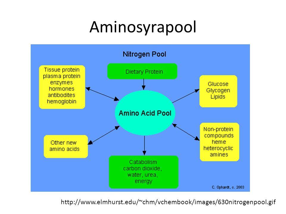 Aminosyrapool http://www.elmhurst.edu/~chm/vchembook/images/630nitrogenpool.gif