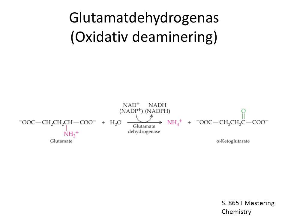 Glutamatdehydrogenas (Oxidativ deaminering) S. 865 I Mastering Chemistry