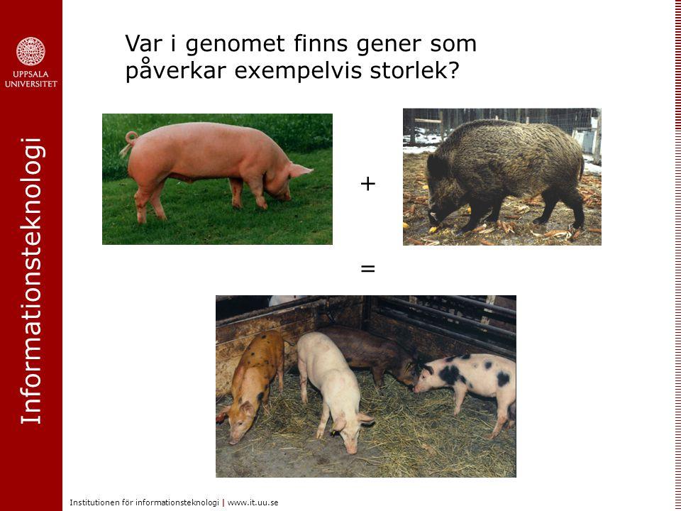 Informationsteknologi Institutionen för informationsteknologi | www.it.uu.se + = Var i genomet finns gener som påverkar exempelvis storlek?