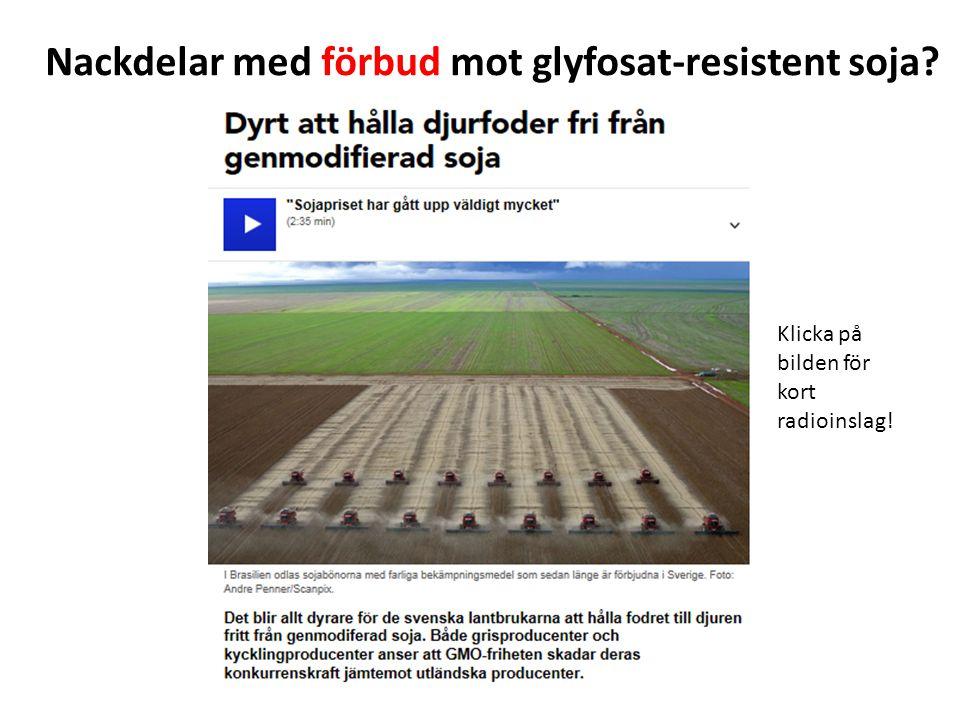 Nackdelar med förbud mot glyfosat-resistent soja? Klicka på bilden för kort radioinslag!