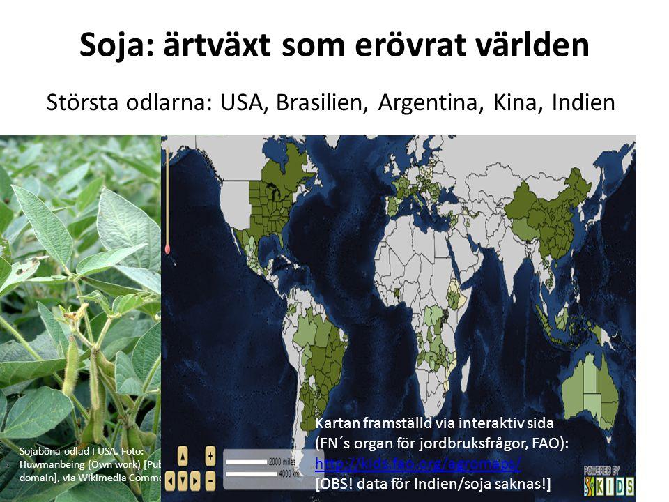 Soja: ärtväxt som erövrat världen Sojaböna odlad I USA. Foto: Huwmanbeing (Own work) [Public domain], via Wikimedia Commons Största odlarna: USA, Bras