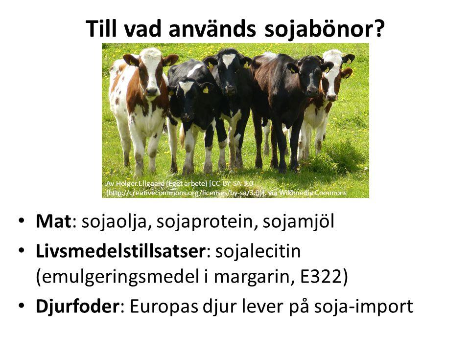 Till vad används sojabönor? Mat: sojaolja, sojaprotein, sojamjöl Livsmedelstillsatser: sojalecitin (emulgeringsmedel i margarin, E322) Djurfoder: Euro