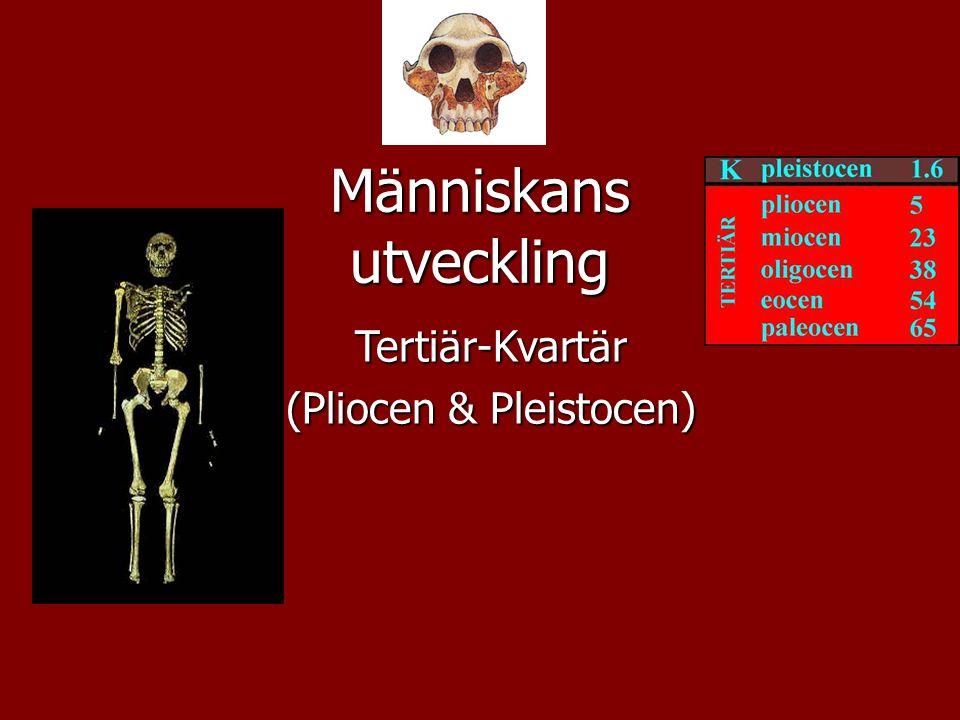 Människans utveckling Tertiär-Kvartär (Pliocen & Pleistocen)