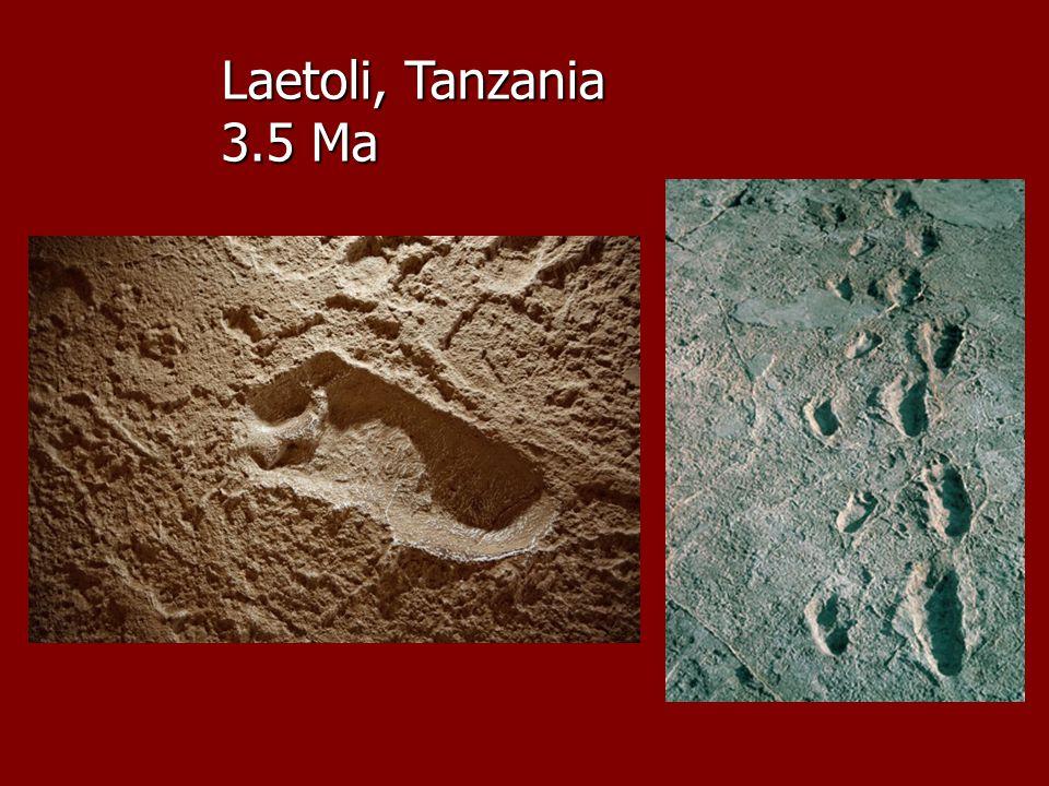 Laetoli, Tanzania 3.5 Ma
