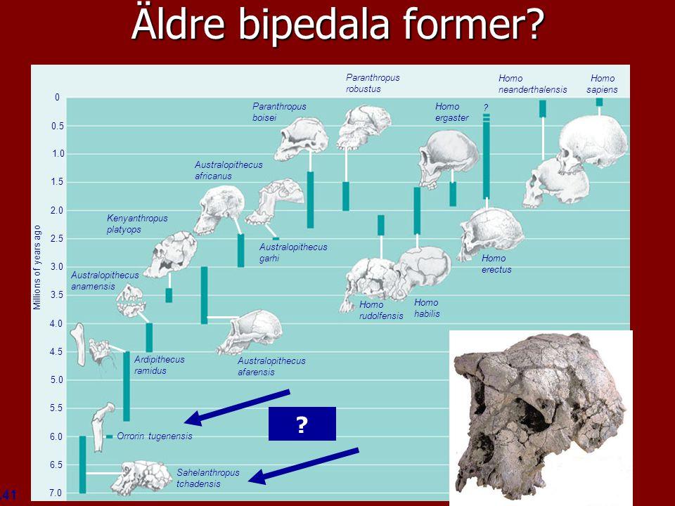 Figure 34.41 Homo sapiens Homo neanderthalensis Homo ergaster ? Homo erectus Homo habilis Homo rudolfensis Paranthropus robustus Paranthropus boisei A