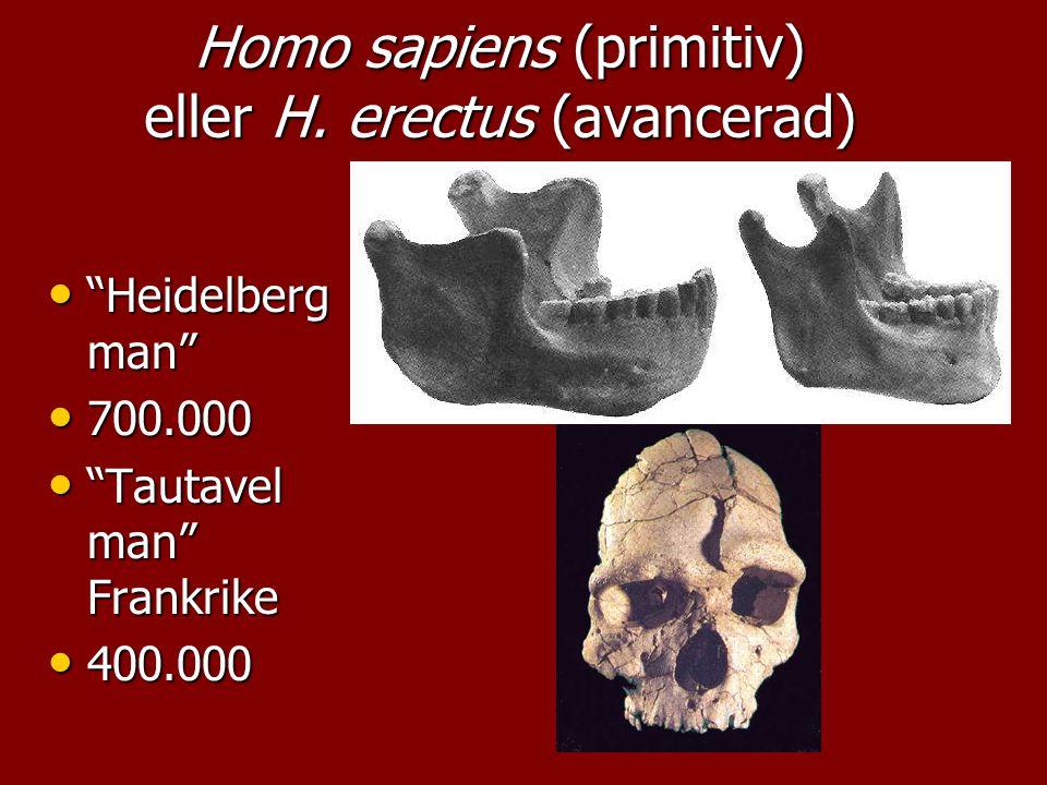 """""""Heidelberg man"""" """"Heidelberg man"""" 700.000 700.000 """"Tautavel man"""" Frankrike """"Tautavel man"""" Frankrike 400.000 400.000 Homo sapiens (primitiv) eller H. e"""