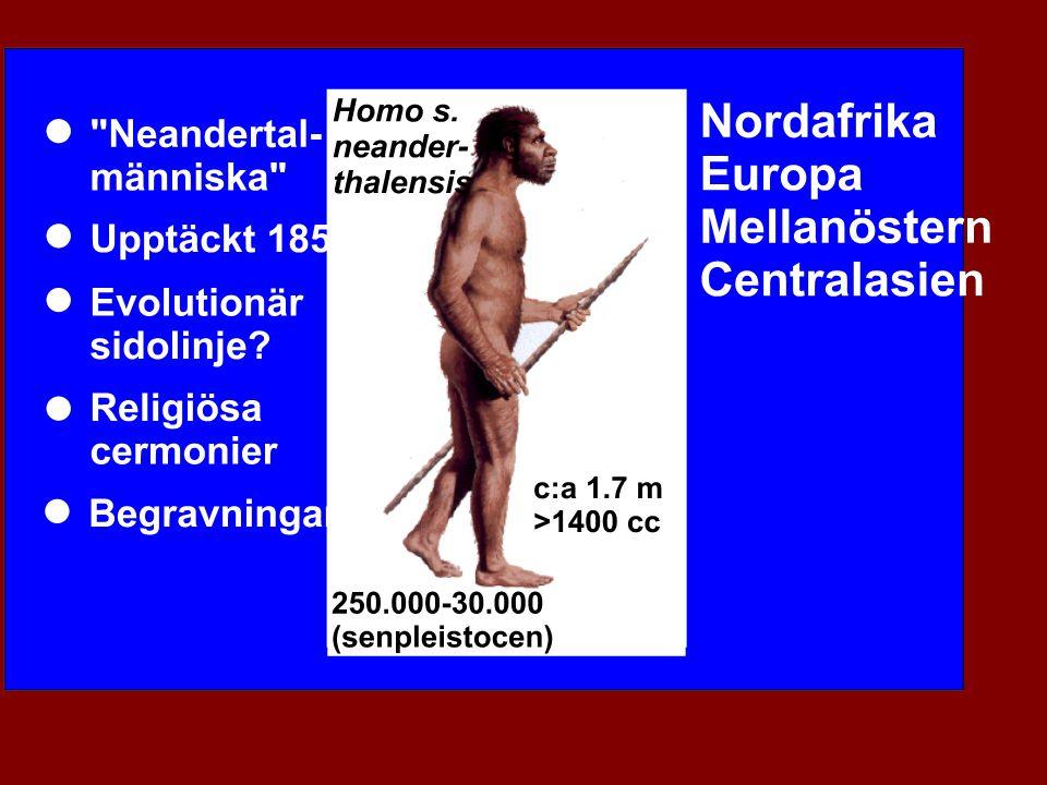 Cro Magnon Man Cro-Magnon, Les Eyzies Frankrike Cro-Magnon, Les Eyzies Frankrike 30,000 30,000 5 skelett 5 skelett Begravning.
