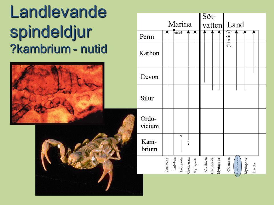 Landlevande spindeldjur ?kambrium - nutid